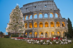 Roman Coliseum celebrates Christmas. View of the Colosseum and of its Christmas tree in the evening, Rome, Italy Royalty Free Stock Images