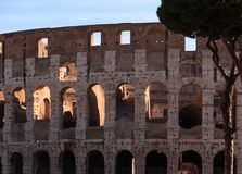 Roman Coloseum and Umbrella Pine. The famous ruins of the ancient Roman Colosseum in Rome, Italy Royalty Free Stock Images