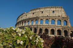 Roman Colosseum Imagem de Stock