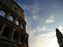 Roman colosseum met boom stock fotografie