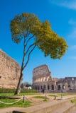 Roman Colosseum som sett från den Palatine kullen i Rome, Ital arkivbilder