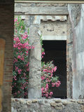Roman column with pink flowers. And green leaves Royalty Free Stock Images