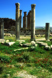 Roman columns. In Jerash, Jordan with wildflowers in the foreground. Jerash is one of the best preserved Roman ruins in the Middle East.  Jerash was one of the Stock Images