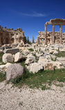 Roman Columns at Baalbeck, Lebanon Stock Photography