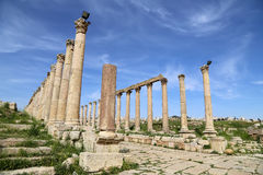 Roman Columns in de Jordanian stad van Jerash (Gerasa van Antiquiteit), Jordanië Royalty-vrije Stock Fotografie