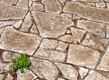 Roman floor. Old roman floor in the ancient Ostia archaeological site near Rome, Italy stock image
