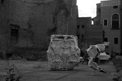 Roman forum. Image of a black and white bird Stock Photography