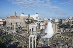 The roman forum rome Italy europe Royalty Free Stock Images