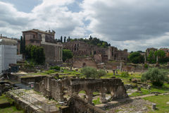 The Roman Forum. Ruins in the roman forum Royalty Free Stock Images
