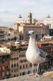 Roman Forum Seagull arkivfoton