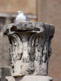 Roman forums, columns, pilasters element with the seagull, Rome, Royalty Free Stock Photos