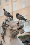 Roman fountain detail. Close detail of sculptured detail from a typical fountain in Rome, Italy, with pigeons unimpressed by the expression on their perch Royalty Free Stock Image