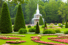 Roman fountain in Peterhof stock images