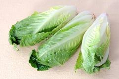 Roman heart lettuce Royalty Free Stock Photos