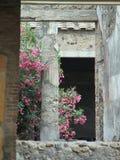 Roman kolom met roze bloemen Royalty-vrije Stock Afbeeldingen