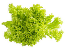 Roman lettuce Royalty Free Stock Image