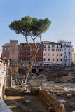 Roman Past e presenza Immagini Stock