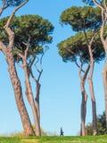 Roman Pine Trees Fotografia Stock Libera da Diritti