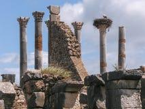 Roman ruïnes van Volubilis in Marokko royalty-vrije stock fotografie