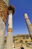 Roman Ruïnes van Volubillis Stock Foto's