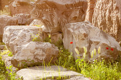 Roman Ruins. Ancient ruins and wild flowers, Rome, Italy Stock Photography
