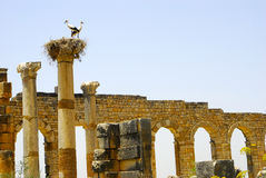 Roman Ruins, Marokko Stockfotos