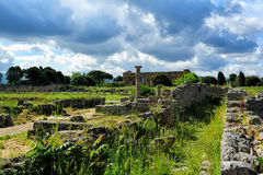 Roman ruins, Paestum Royalty Free Stock Photo