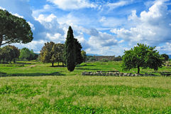 Roman ruins, Paestum Royalty Free Stock Image