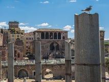 Roman ruins in Rome, Italy Royalty Free Stock Photo