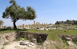 Roman ruins at Umm Qais (Umm Qays) --is a town in northern Jordan near the site of the ancient town of Gadara. Stock Images