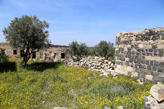 Roman ruins at Umm Qais (Umm Qays) --is a town in northern Jordan near the site of the ancient town of Gadara. Royalty Free Stock Photography