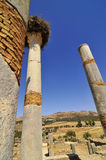 Roman Ruins of Volubillis. Excavations of the ancient roman ruins of volubillis Stock Photos
