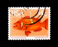 Roman Seabream Chrysoblephus laticeps, Definitives Flora and Fauna serie, circa 1974. MOSCOW, RUSSIA - JANUARY 2, 2018: A stamp printed in South Africa shows Royalty Free Stock Photos