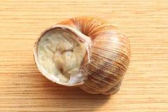 Roman snail Stock Images