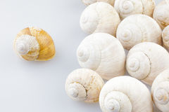 Roman snail shells. On a white background Stock Images