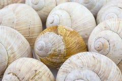Roman snail shells Stock Image