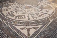 roman volubilis för marmormorocco mosaik n Royaltyfri Fotografi