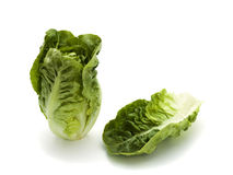 Romana lettuce and leaf Royalty Free Stock Images