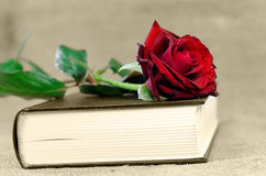 Romance. A book covered with a red rose Royalty Free Stock Photo