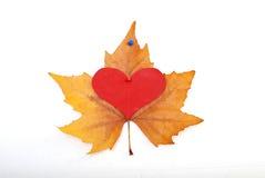 Romance in autumn Royalty Free Stock Photos