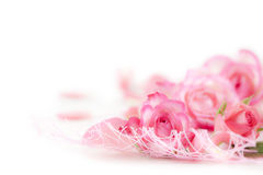 Romance background. Rose blossom on white background stock photos