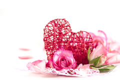 Romance background. Rose blossom on white background royalty free stock photos