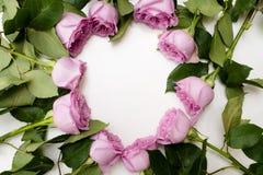 Romance blanc de fond de roses de guirlande rose de cercle Image libre de droits