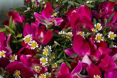 Romance flower bouquet. Romance bouquet with various flower Stock Photo