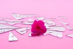 Romance brisé dans les morceaux roses Images stock