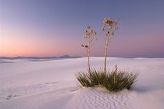 Romance dans les sables blancs Images stock