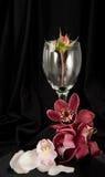 Romance de florecimiento Imagenes de archivo