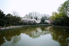 Romance de flores de cerezo imagen de archivo