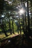 Romance de forêt photographie stock