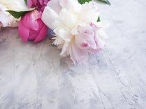 romance de la flor de la peonía en marco concreto gris del fondo fotografía de archivo